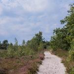 39ste Kattenbosserheidetocht – Donderdag, 02/09/2021